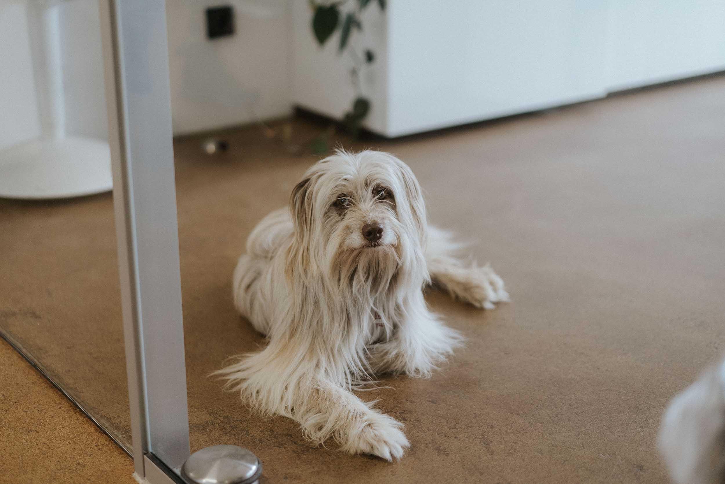 Ambient Hunde und Menschen